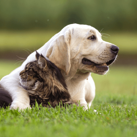 Cancer and Your Pet: What You Need to Know