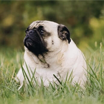 What to do if you suspect your pet is growing a little too portly